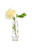 白色在花瓶上升了 免版税库存照片