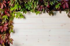 白色垂直的木背景由板条做成 免版税库存图片