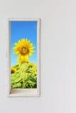 白色墙壁窗口用在蓝天视图的向日葵 免版税库存照片