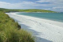 白色壳沙子海滩 库存图片