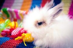 白色复活节兔子 库存照片
