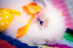 白色复活节兔子 免版税库存照片