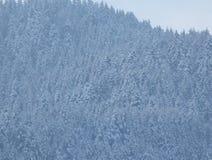白色多雪的风景 在雪的冬天结构树 免版税库存照片