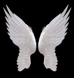 白色天使翼 库存照片