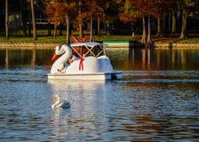 白色天鹅和天鹅小船-湖Eola,佛罗里达 免版税库存图片