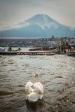 白色天鹅游泳在有Mt的池塘 富士 图库摄影