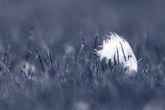 白色天鹅羽毛 免版税图库摄影