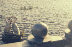 白色天鹅雕象  库存照片