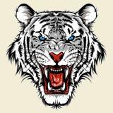 白色孟加拉老虎头 库存照片
