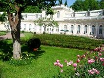 白色宫殿在petergof公园围拢了树 免版税库存图片