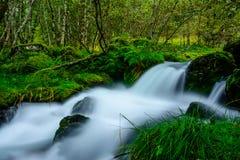 白色小河, NP福尔格冰川,挪威 免版税图库摄影