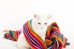 白色小猫包裹与一条五颜六色的围巾 免版税库存图片