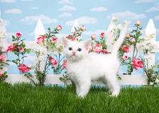 白色小猫在花园里 免版税库存照片