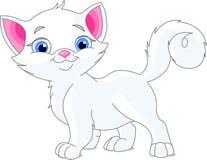 白色小猫 图库摄影