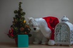 白色小的小狗圣诞老人 免版税库存照片