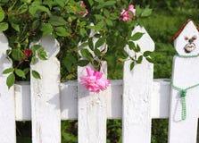 白色尖桩篱栅和桃红色罗斯 库存图片