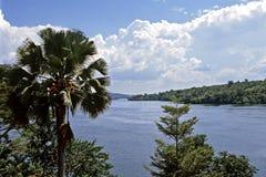 白色尼罗河的来源在乌干达 库存图片