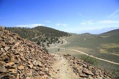 白色山看法从古老Bristlecone杉树,加利福尼亚的 库存照片