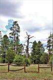 白色山自然中心, Pinetop湖边,亚利桑那,美国 免版税库存图片