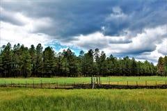 白色山, Pinetop湖边,亚利桑那,美国 库存照片