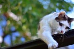 白色布朗猫被弄脏的背景 免版税库存照片