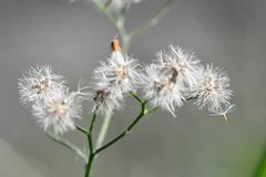 白色开花的花 免版税库存照片