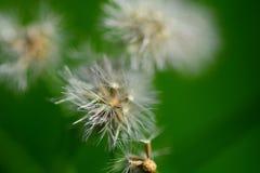 白色开花的花 库存照片