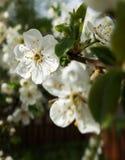 白色开花花 库存照片
