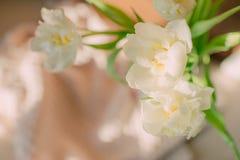 白色微型黄水仙 库存照片