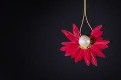 白色成珠状在红色瓣的项链在黑色 免版税库存照片
