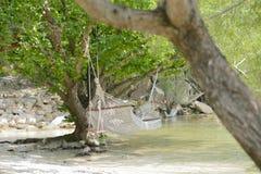 白色摇篮被栓的海滩海滩树 库存照片