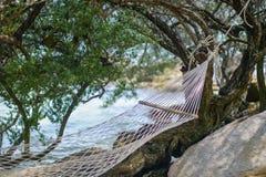 白色摇篮被栓的海滩海滩树 免版税图库摄影
