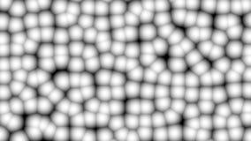 白色摘要求使成环的3d动画的立方 白色墙壁移动 股票视频