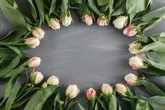 白色新春天郁金香植物的艺术花卉背景圆的框架花圈野花概念妇女` s天问候 免版税库存图片