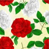 白色无缝的纹理的玫瑰和编辑可能红色花和叶子自然本底葡萄酒传染媒介的例证 库存图片
