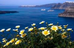 白色春天在圣托里尼海岛的岸开花  Gr 免版税库存图片