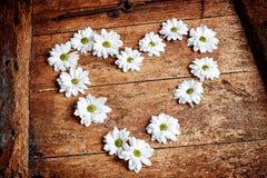 白色春天雏菊的土气华伦泰心脏 免版税图库摄影