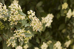白色春天 免版税图库摄影