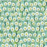 白色春黄菊的无缝的夏天样式在草的 以花沼地的形式五颜六色的背景 向量例证