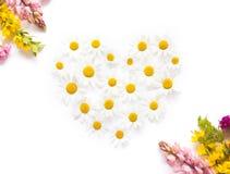 白色春黄菊心脏明信片 库存照片