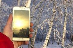 白色智能手机在手中有日落反射的,以一个模糊的冬天森林为背景 免版税库存照片