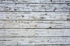 白色木纹理 图库摄影