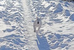 白色杂种犬 免版税图库摄影