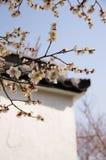 白色李子在春天开花开花 免版税库存图片