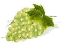 白色束每束白葡萄 免版税库存图片