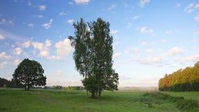白色松在夏天风景,飞行,通过,天空蔚蓝在多云夏日,好当自然背景俄罗斯,鸭子飞行庸医 股票录像