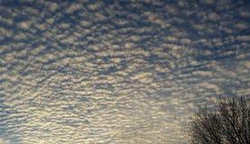 白色松的云彩和蓝天在日落前 免版税图库摄影