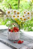 白色柳条筐用草莓和红浆果在雏菊花束的背景  免版税库存图片