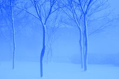 白色树在蓝色冬天 库存照片