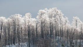 白色树在高山的冬天 免版税库存图片